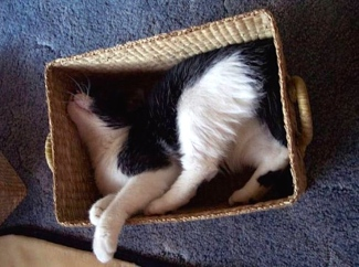 sleeping cat stuffed in box