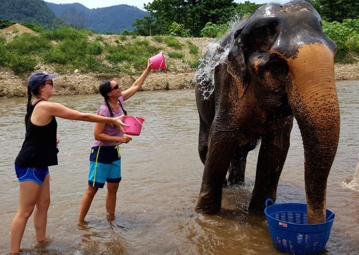 washing-the-elephants