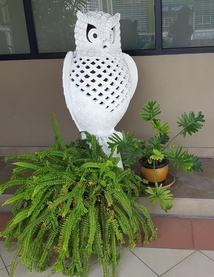 myTESOL owlie